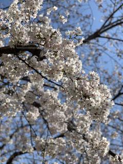 木の枝に花の花瓶の写真・画像素材[1923993]