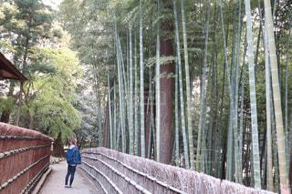 竹林を見上げての写真・画像素材[2027875]