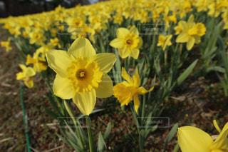 花の写真・画像素材[2027895]