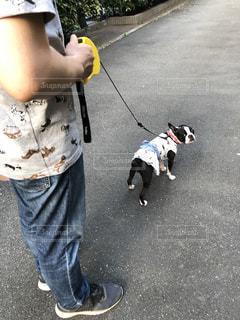 愛犬の散歩の写真・画像素材[2206063]