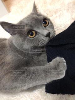 近くに猫のアップの写真・画像素材[1903960]