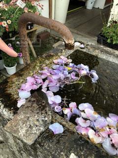 水に浮かぶ花びらの写真・画像素材[2102038]