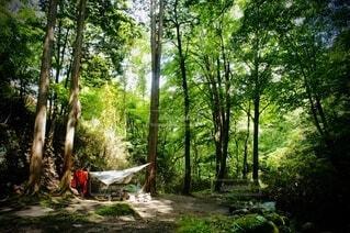 渓流沿いでハンモックキャンプの写真・画像素材[4744185]