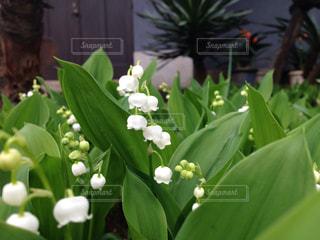 花の写真・画像素材[125819]