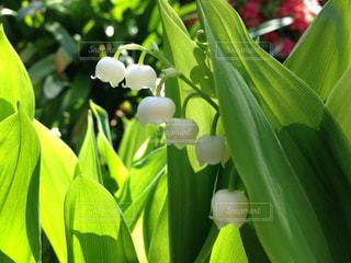 花の写真・画像素材[125820]
