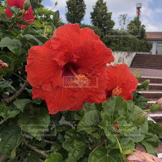 花の写真・画像素材[1972425]