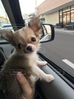 窓の前に座っている犬の写真・画像素材[1941103]