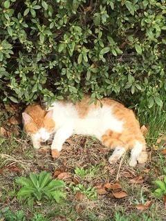 猫の写真・画像素材[67056]