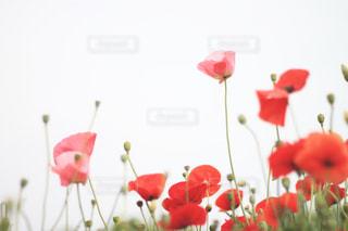 空へ伸びる花の写真・画像素材[1903400]