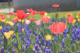 春の花々の写真・画像素材[1917188]