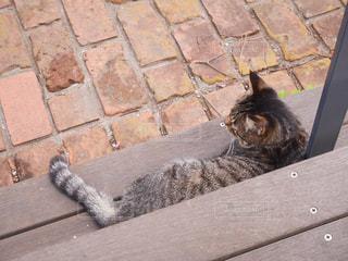 階段の下の猫の写真・画像素材[1978958]