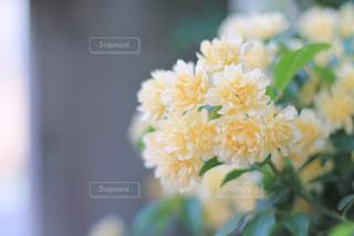 お花のある暮らしの写真・画像素材[2010627]