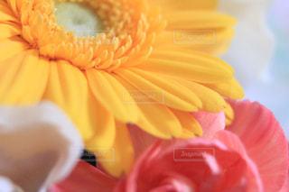 お花のアップの写真・画像素材[2014410]