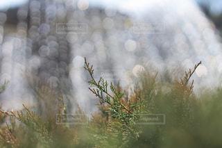 キラキラに輝く葉っぱの写真・画像素材[2031209]
