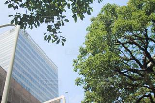 東京散歩の写真・画像素材[2045626]