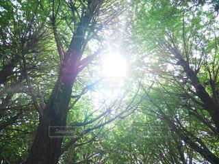 木立の隙間から光の写真・画像素材[2055771]