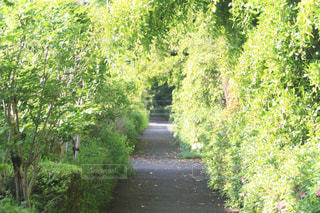 緑のトンネルの写真・画像素材[2059783]