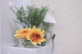 黄色い花の写真・画像素材[2059787]