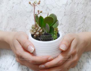 多肉植物の寄せ植えの写真・画像素材[2062486]