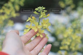 葉牡丹の花の写真・画像素材[2067537]