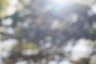 光を捉えるの写真・画像素材[2067664]