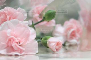 母の日の贈り物の写真・画像素材[2072692]