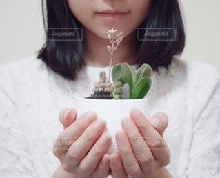お気に入りの寄せ植えの写真・画像素材[2072923]
