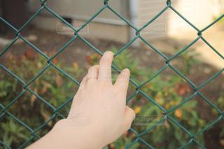 フェンスにかける手の写真・画像素材[2073490]
