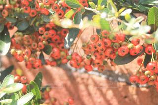 植物の実と影の写真・画像素材[2078310]