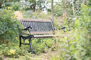 緑に囲まれたベンチの写真・画像素材[2082244]