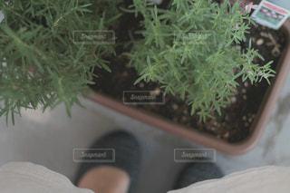 ベランダ菜園のプランターの写真・画像素材[2088965]