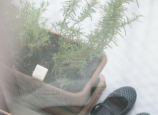 ベランダの鉢植えの写真・画像素材[2240868]