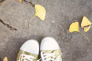 秋の足元の写真・画像素材[2341065]