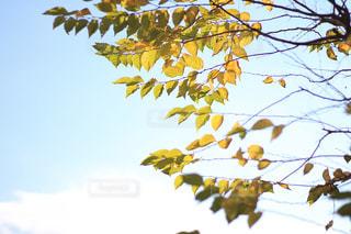 秋の空の写真・画像素材[2341066]