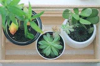 観葉植物の写真・画像素材[2344270]