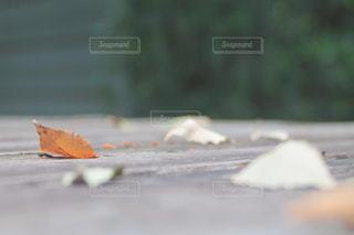 ベンチの上の落ち葉の写真・画像素材[2370906]