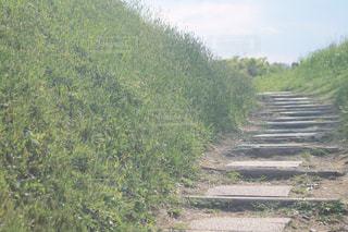 緑の階段の写真・画像素材[2379850]