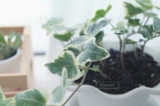 窓際の観葉植物の写真・画像素材[2441028]