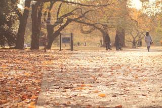 秋の景色の写真・画像素材[2691030]