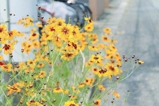 咲き誇る花ビタミンカラーが映えますね*°♡の写真・画像素材[3398180]