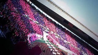 セレッソ大阪の応援風景ですの写真・画像素材[1907607]