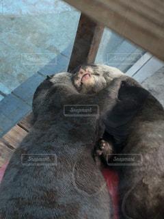動物の写真・画像素材[2020068]