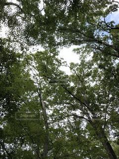 木の近くでの写真・画像素材[2733721]