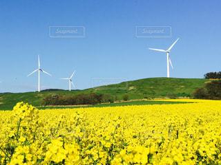 緑豊かな野原の上の風車の写真・画像素材[2118435]
