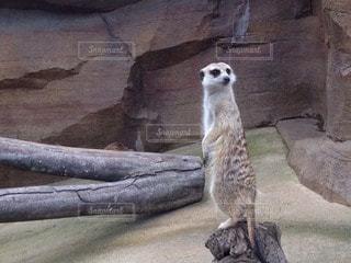 動物園の写真・画像素材[72295]
