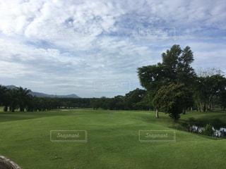 背景の木と大規模なグリーン フィールドの写真・画像素材[865062]