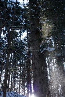冬 - No.288033