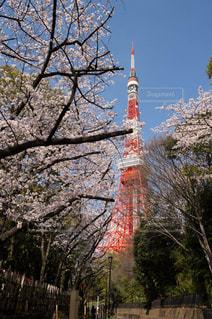 風景 - No.350909