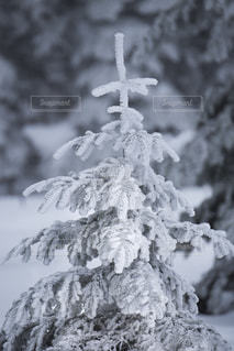 冬 - No.350949