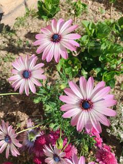 薄紫の花の束の写真・画像素材[1930836]